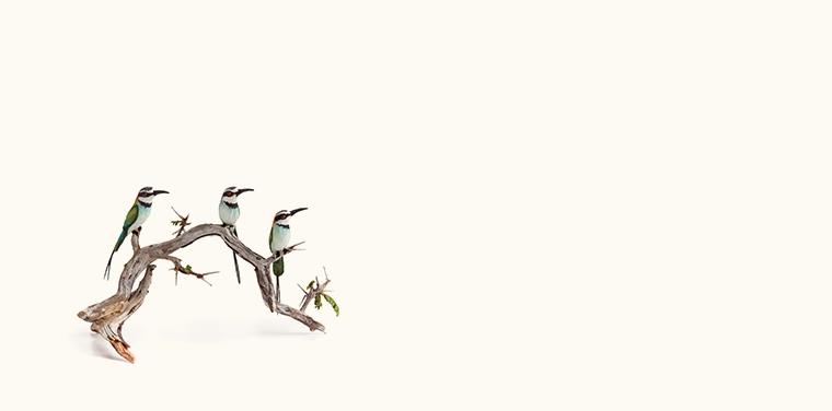 Miniature Masterworks: Beth Freeman-Kane