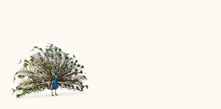 Miniature Masterworks: Elizabeth McInnis